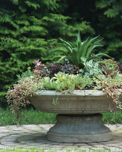 succulent planter at Plantsville Pines