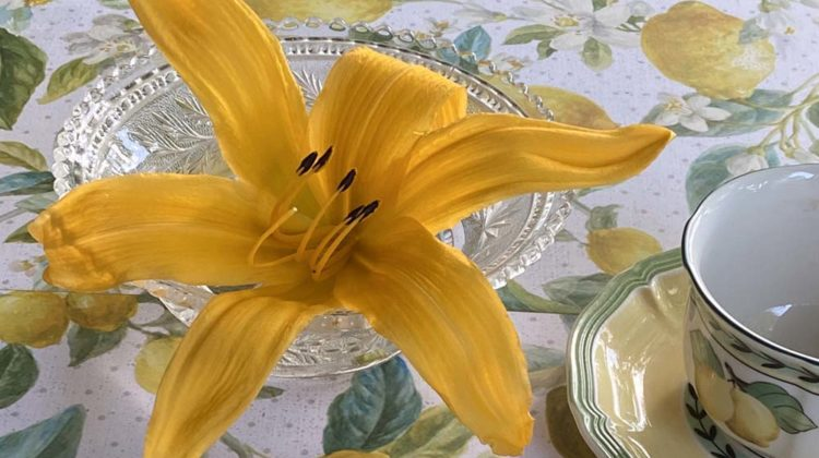 A vibrant yellow 'Mico' daylily bloom in a small glass dish beside a cup and saucer, sitting on a botanical tablecloth featuring lemons and white flowers