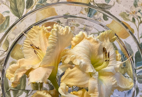boundless beauty daylily blooms arranged in a shallow dish