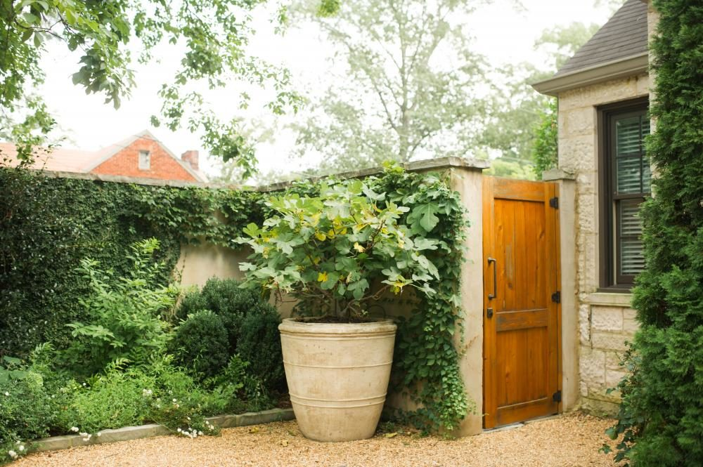 landscape after photo: courtyard with cypress gate, fig tree, and lush green garden bed