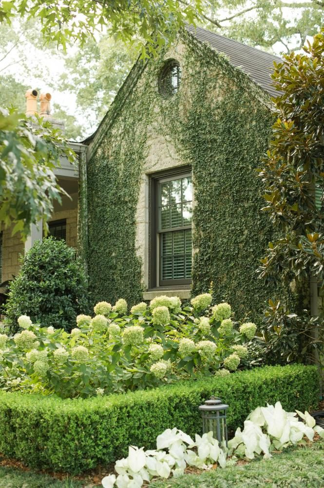 front yard landscape after photo: creeping fig-covered wall and a mix traditional European and Southern U.S. plantings