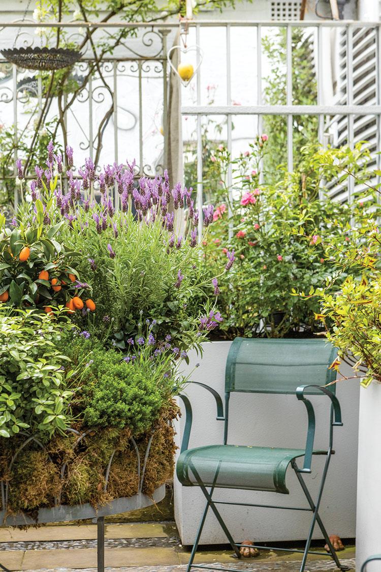 Nina Campbell's garden terrace
