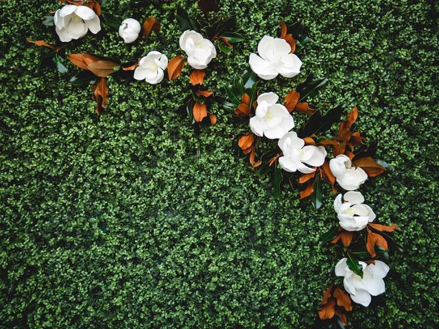 A garland of magnolia foliage with faux magnolia blooms adorns a boxwood hedge