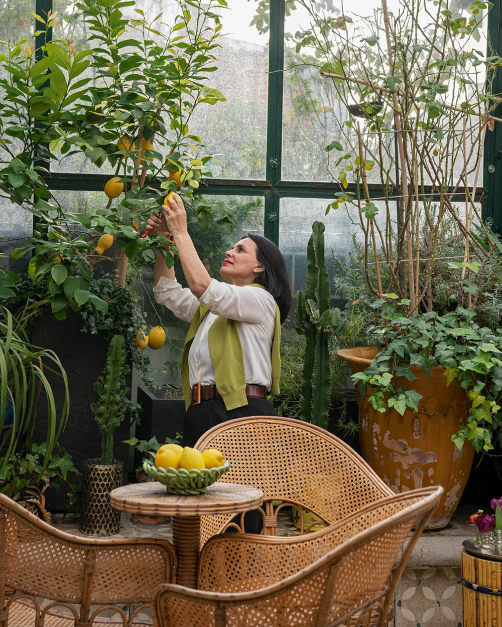 Terry de Gunzburg picks lemons grown indoors in her citrus house. Beside her a small table, surrounded by caned chairs, holds a bowl of lemons.