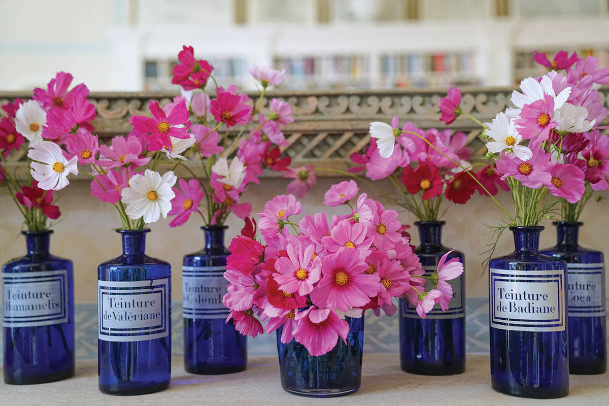 An arrangement of blue glass medicine bottles filled with pink cosmos blooms from CHARLOTTE MOSS FLOWERS