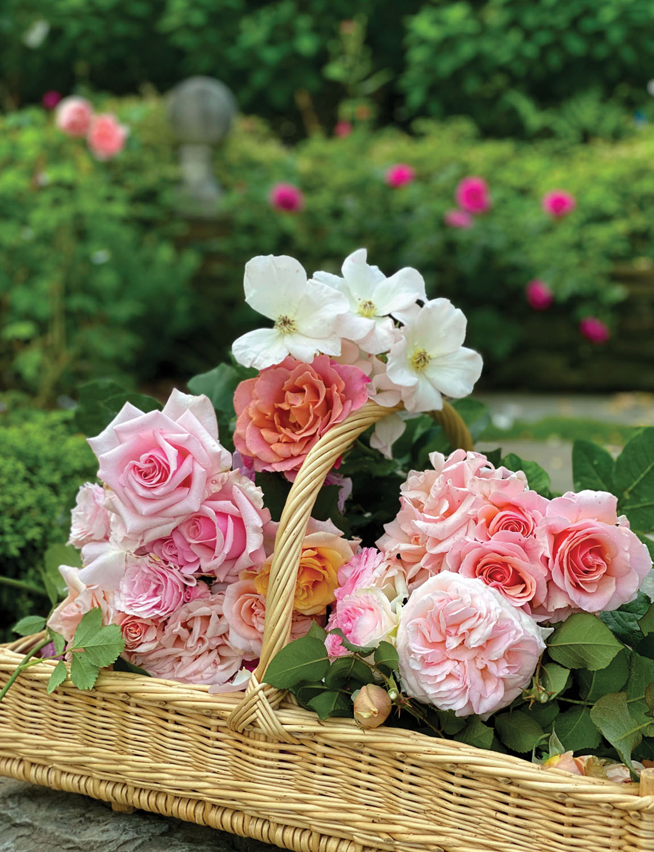 a basket of peachy pink garden roses
