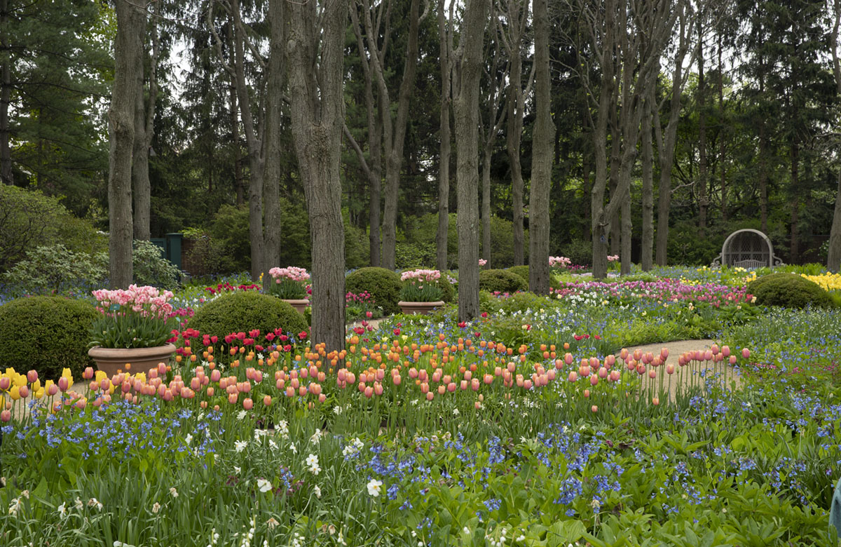 """Caption from the book Gardens of the North Shore of Chicago: """"Tulips, of various cultivars, colors, and heights, are the stars of spring under the honey locust allée. Terra-cotta pots filled with peony-shaped Angelique tulips line the walkway."""" (Beauty Without Boundaries in Winnetka)"""