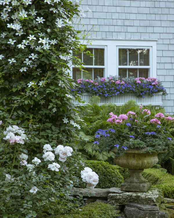 """Caption from the book Gardens of the North Shore of Chicago: """"Window boxes and urns overflow with pink geraniums and annuals while New Dawn climbing roses and white clematis scamper up a trellis."""" (Lenhardt Garden in Winnetka)"""
