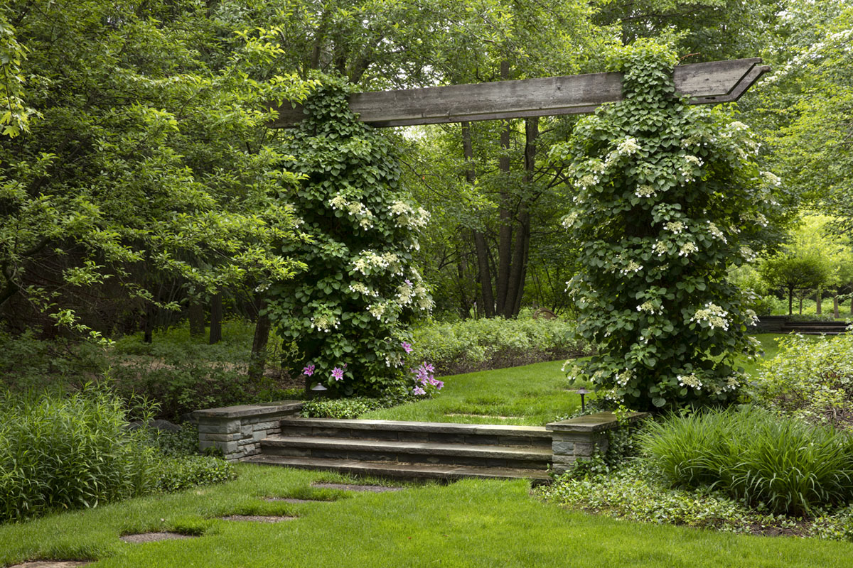 """Caption from the book Gardens of the North Shore of Chicago: """"A weathered arbor entwined with climbing hydrangea marks the beginning of the maple allée leading to the orchard."""" (Levin Garden at Highland Park)"""
