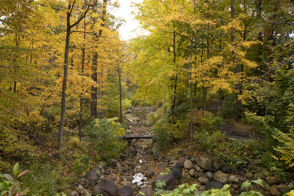 """Caption from the book Gardens of the North Shore of Chicago: """"The restored Mayflower Ravine [at the Rumsey Estate in Lake Forest] is a defining feature of the landscape. Autumn brings gold, chartreuse, and green foliage to the steep slopes above the streambed."""""""