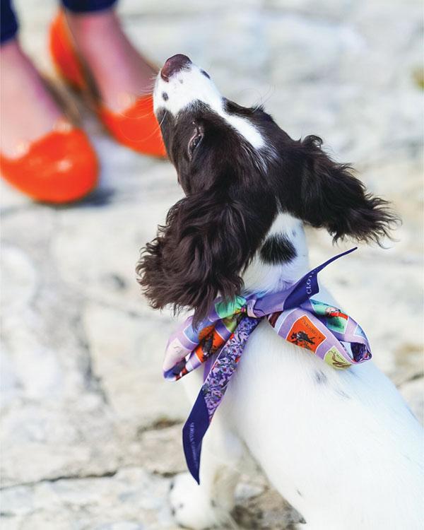 black and white dog wearing a Sorella silk ribbon tied around its neck