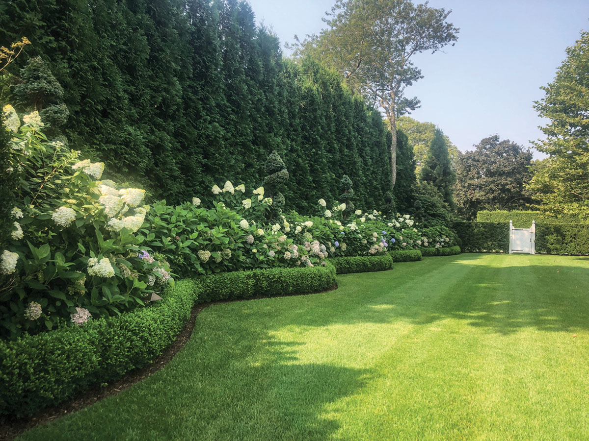 A landscape border by Quincy Hammond featuring a row of tall hedges, spiral topiaries, and flowering oak leaf hydrangeas--all contained by an undulating line of low hedges