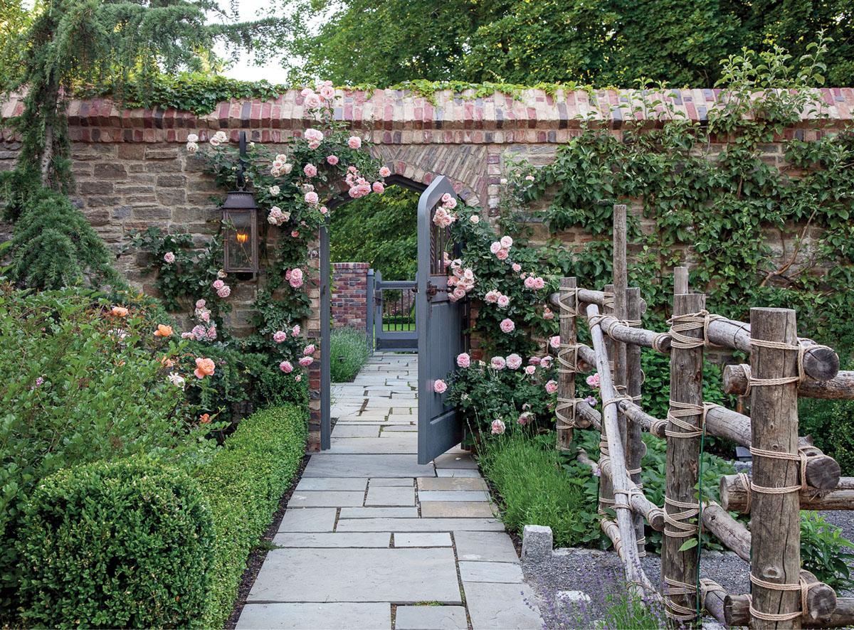 climbing roses, garden wall
