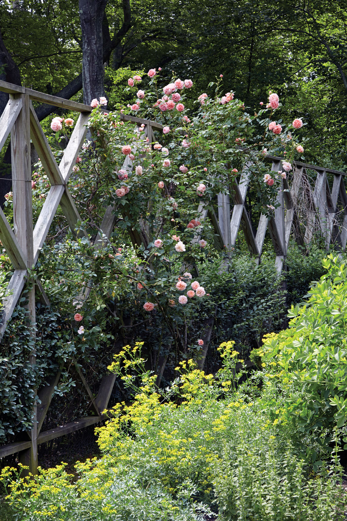 climbing roses, deer fence by landscape designer Lisa Bynon