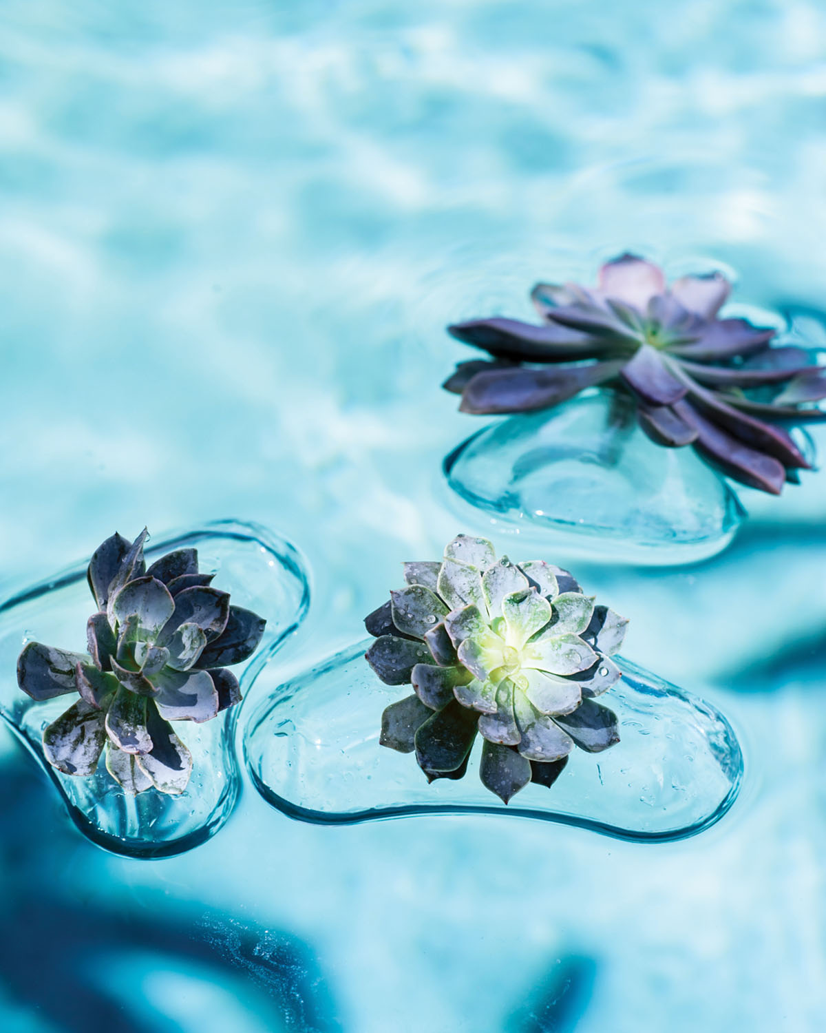 a trio of floating vases hold succulents on a sparking pool surface