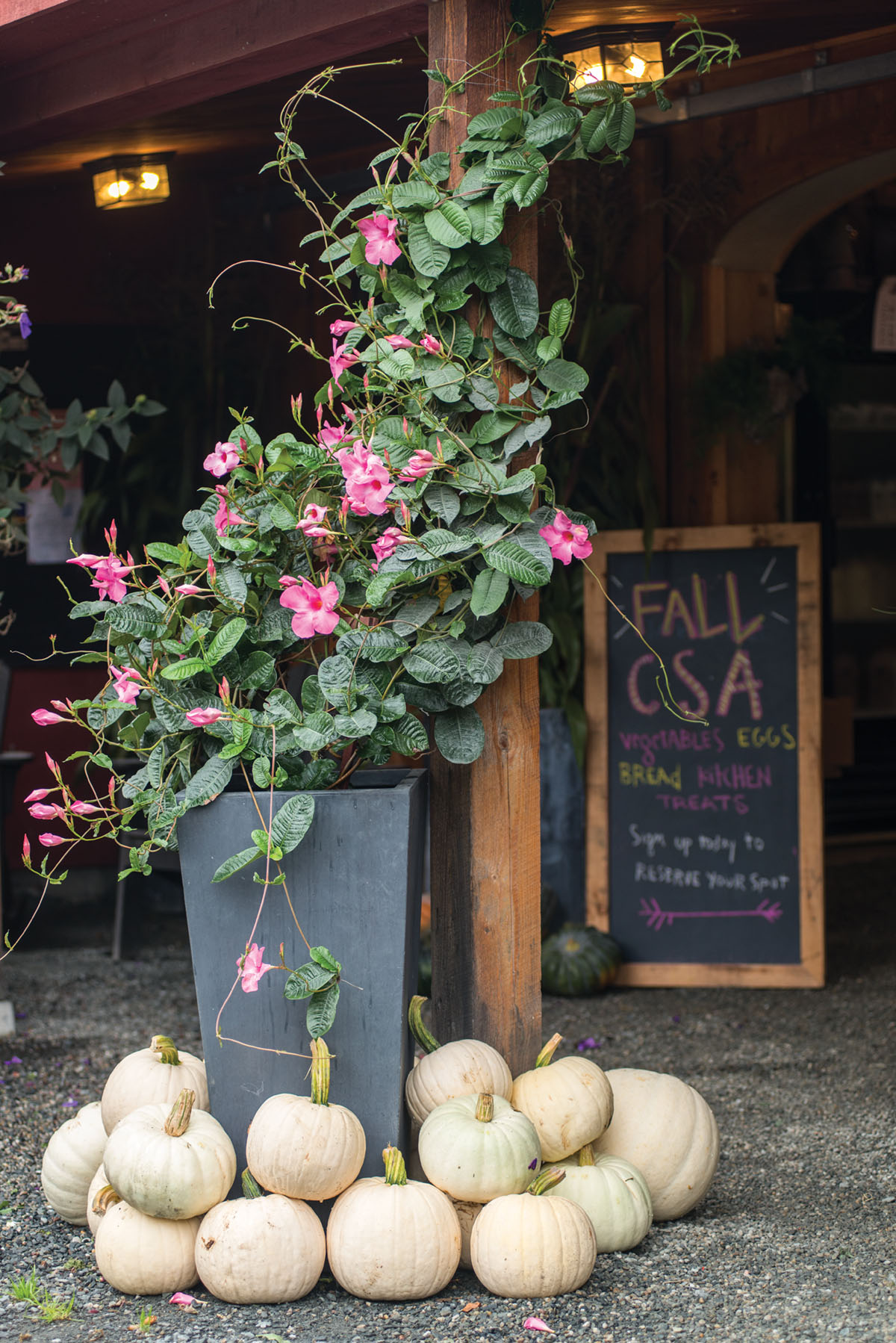 Vignette of cream-colored pumpkins and a container featuring a pink flowering vine. A chalk sign in the background advertises Edgewater Farm's fall CSA, listing vegetables, eggs, bread, and kitchen treats