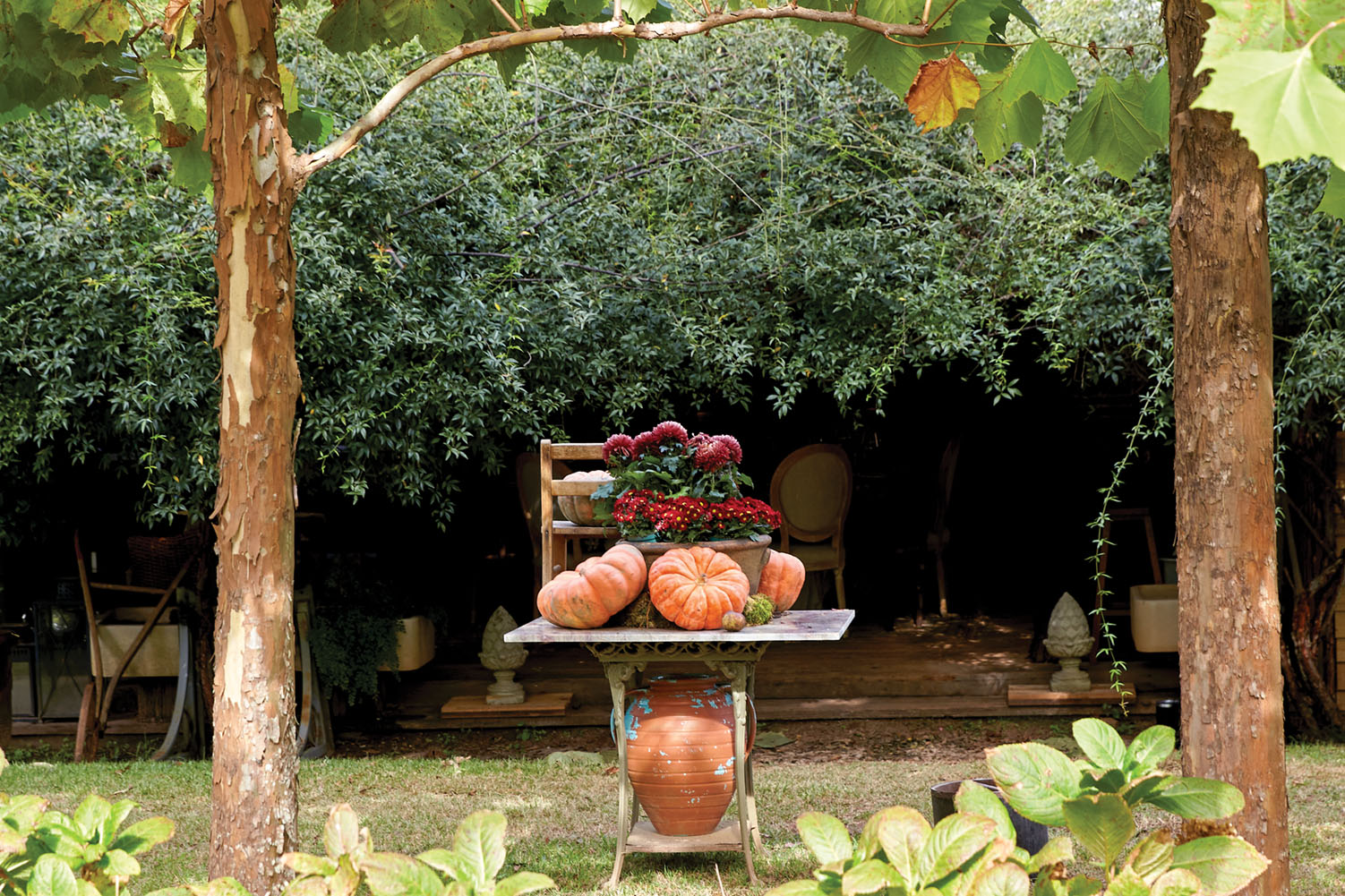autumn display of pumpkins and flowers