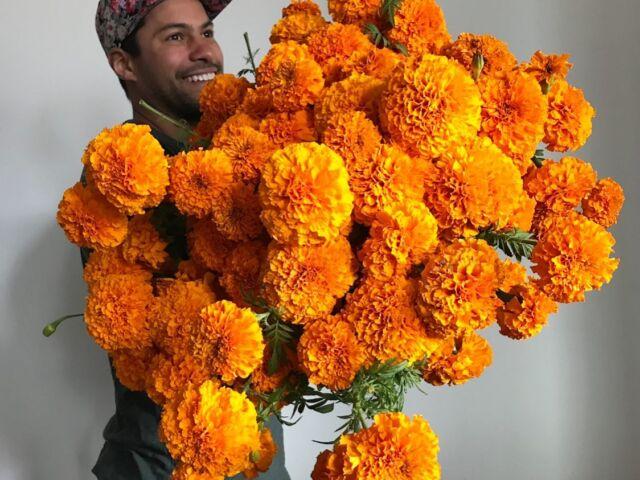 types of marigolds, Jedi marigolds